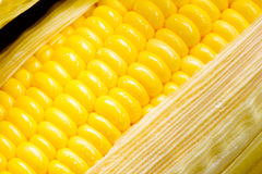 玉米图象 免版税图库摄影
