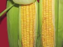 玉米在宏指令的玉米 库存照片