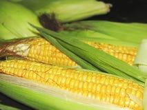 玉米在宏指令的玉米 免版税库存照片