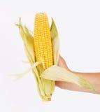玉米在手中 免版税图库摄影