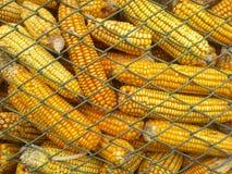 玉米在粮仓 库存照片