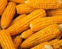 玉米堆背景 库存照片