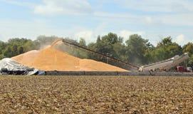 玉米堆 免版税库存照片