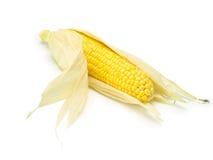 玉米壳查出的白色 图库摄影
