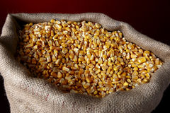 玉米大袋 免版税库存照片