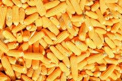 玉米完成好饲料宠物的 库存图片