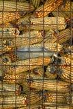 玉米干储存 免版税库存图片