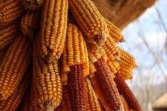 玉米干民间韩文传统村庄 图库摄影