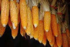 玉米干燥种子 免版税库存图片