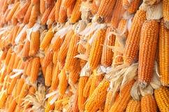 玉米干黄色 免版税库存图片