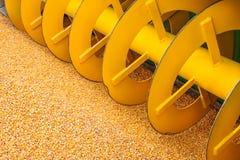 玉米庄稼收割机机器用在前面的新鲜的玉米 库存照片