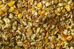 玉米废物和谷壳 玉米印地安人 特写镜头 背景 宏观图象可以使用作为背景 库存图片
