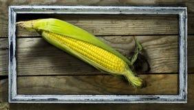 玉米成熟玉米棒在一个老框架的 库存照片
