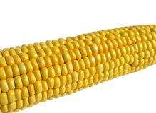 玉米成熟白色 图库摄影