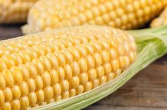 玉米成熟黄色 免版税库存照片