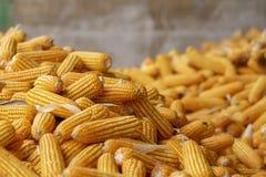 玉米或玉米处理的成黄色饲料 关闭框架 图库摄影
