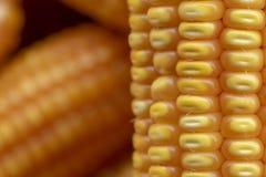 玉米或玉米处理的成黄色饲料 关闭框架 免版税图库摄影