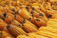 玉米批次 图库摄影