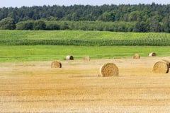 玉米捷克域共和国 免版税图库摄影