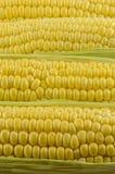 玉米接近02 免版税库存照片