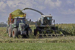 玉米收割期 免版税图库摄影
