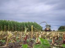 玉米收获在晚上 库存照片