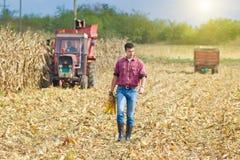 玉米收获的农夫 免版税库存照片