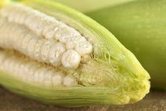 玉米新原始的甜白色 库存图片
