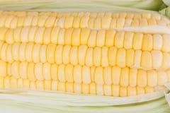 玉米新鲜原始 免版税库存照片