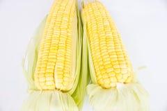 玉米新鲜原始 免版税库存图片