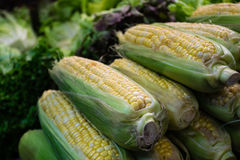 玉米新鲜有机 免版税库存照片