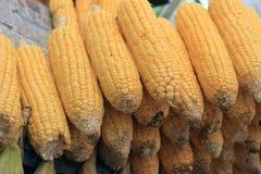 玉米新鲜蔬菜 玉米棒子行  库存照片