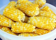 玉米春天 免版税库存图片