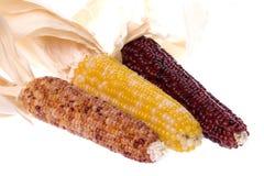 玉米查出的万圣节 免版税库存图片