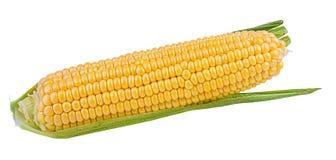 玉米查出的白色 库存照片