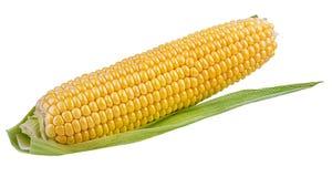 玉米查出的白色 免版税库存图片