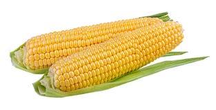 玉米查出的白色 免版税库存照片