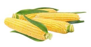 玉米查出的白色 图库摄影