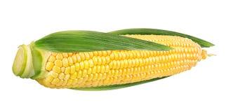 玉米查出的白色 免版税图库摄影