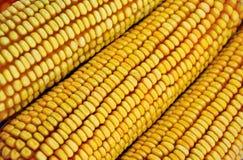 玉米棒原始列的玉米 免版税库存照片