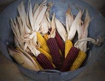 玉米棒子。 免版税库存图片