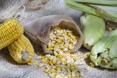 玉米棒子和五谷 库存图片