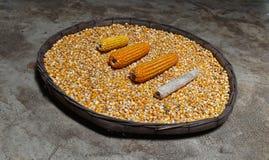 玉米棒子和玉米在许多烘干了玉米种子在老吹开的篮子在为背景研的肮脏的水泥 免版税图库摄影