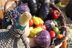玉米棒子和秋天蔬菜 免版税库存照片
