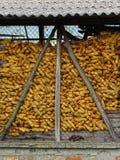 玉米棒子在谷仓 库存图片