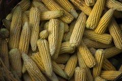 玉米棒子待售 免版税库存图片