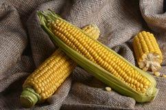 玉米棒子特写镜头 库存图片