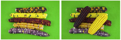玉米棒子玉米印地安人上色绿色背景拼贴画 库存照片