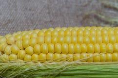 玉米棒子细节 库存图片