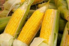 玉米棒子 免版税库存图片